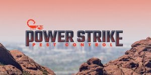 Pest control company in Phoenix designed by Motion Tactic in Tempe Arizona